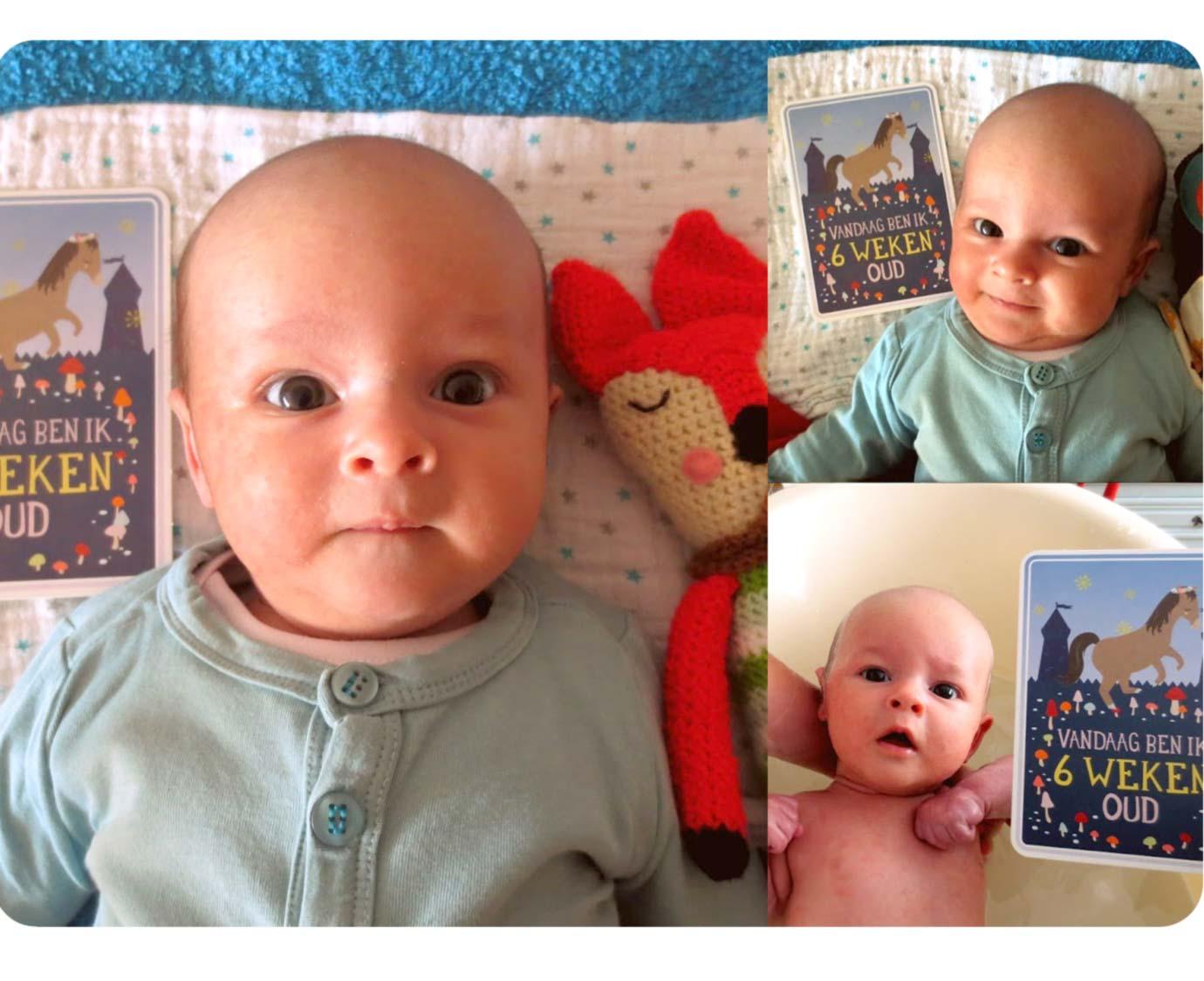 Milestone Baby Cards NL